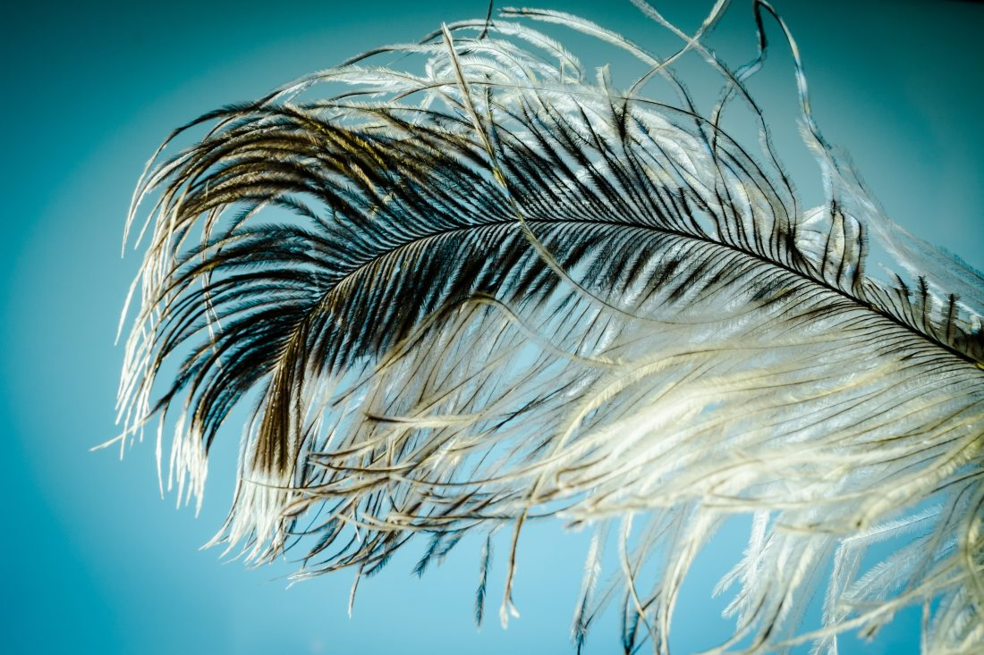 Stock photo of a fluffy black-and-white feather against a blue background, a reference to the tickling kink I do not have and also a nice complement to my blue-and-purple blog colour scheme.